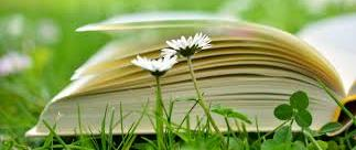 open book on grass with daisies